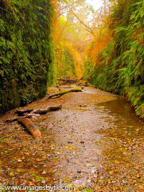 Fern Canyon - Prairie Creek Redwood State Park- California