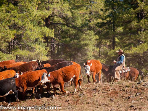 Pushing The Herd - Arizona Fine Art Photograhy for Sale