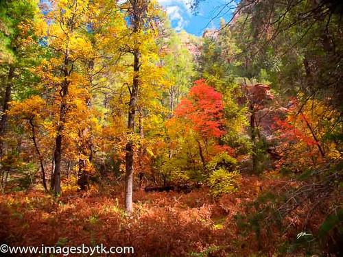 Sedona Fall Colors  Arizona