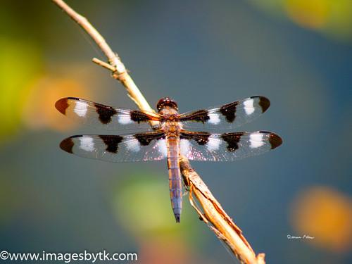 Dragonfly - California Fine Art Photograhy for Sale