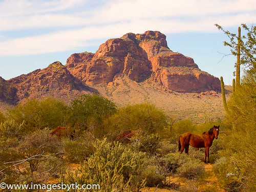 Wild Horse Country - Salt River Arizona