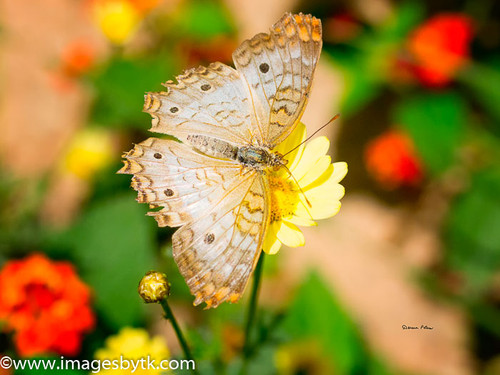 Butterfly Fine Art Photograhy for Sale