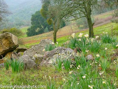 Donner Cabin Site - Mount Diablo State Park - California Fine Art Photograhy for Sale