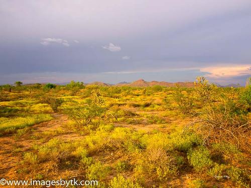 Summer Monsoon Flowers - Arizona