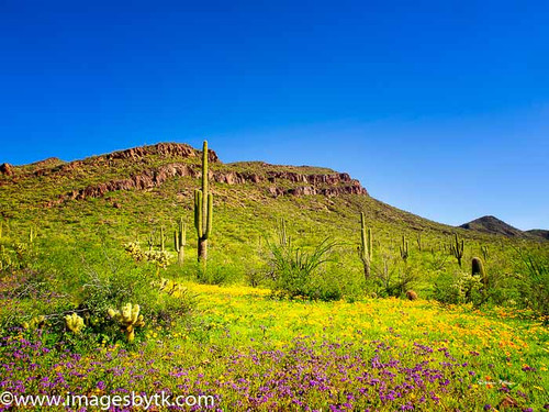 Spring At Robson Arizona Mining World
