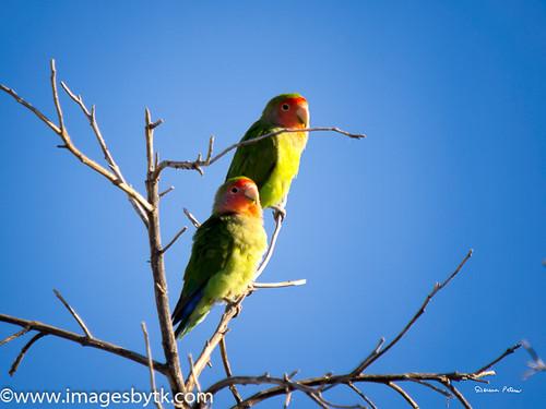 Love Birds - Arizona Fine Art Photograhy for Sale