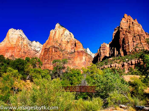 Turkey Crossing at the Court Of The Patriarchs - Zion National Park - Utah