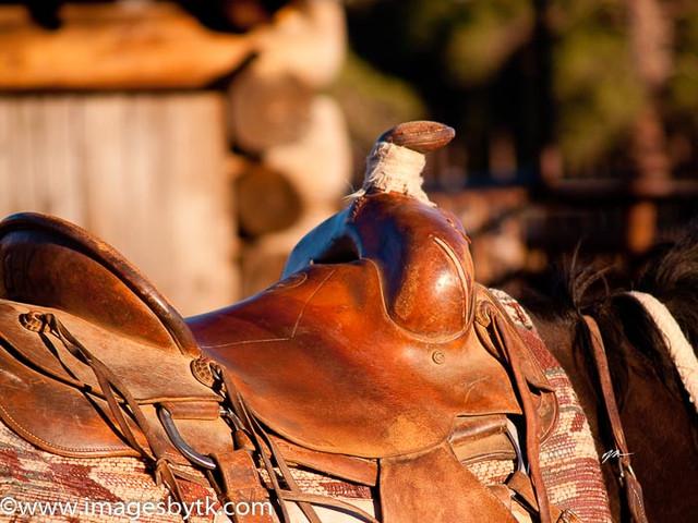 Saddle - Arizona