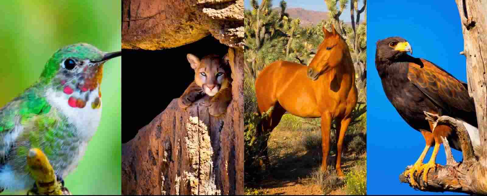 Photographs of Wildlife - Animals