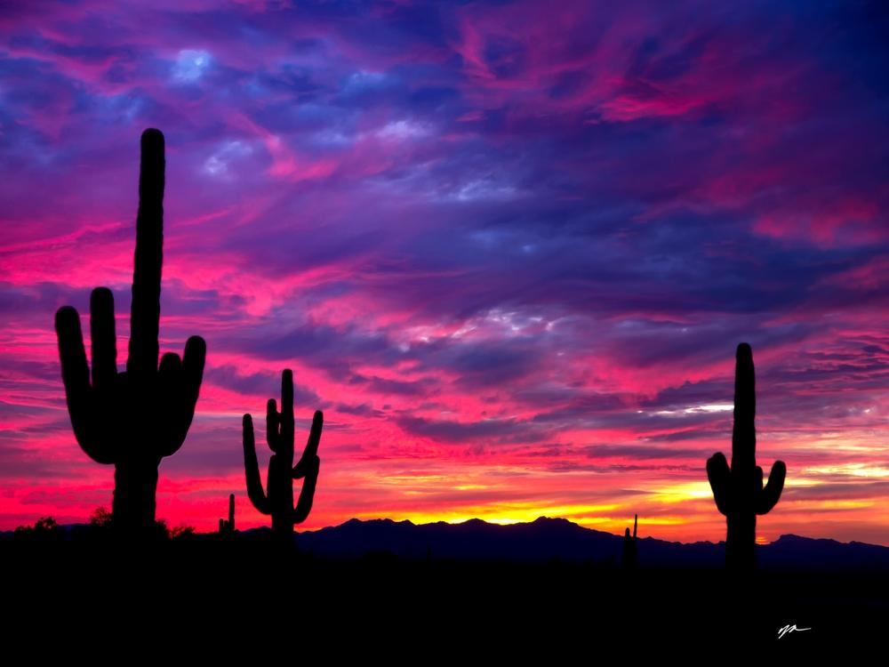 Saguaro Sunset at White Tanks Regional Park