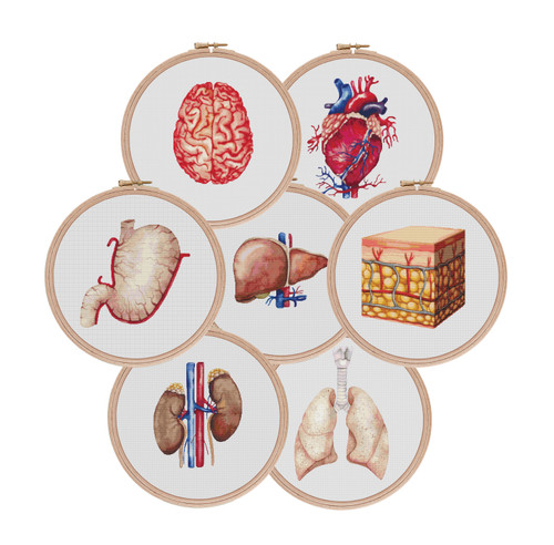 Anatomical Organs Collection cross stitch pattern