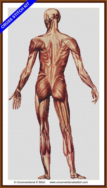 Male Human Anatomy Back cross stitch kit