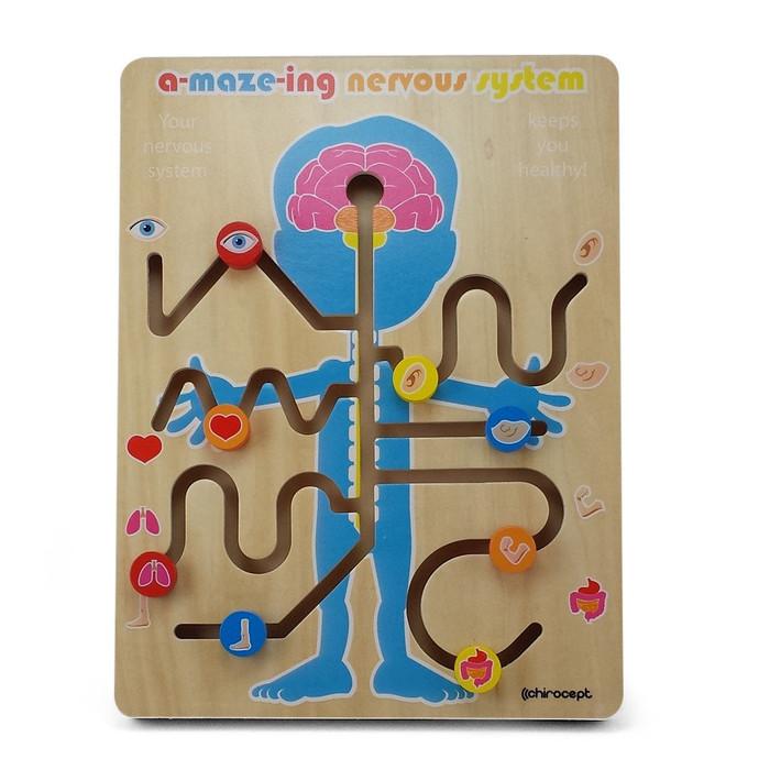A-maze-ing nervous system
