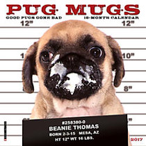 Willow Creek Press 18-Month Monthly Mini Wall Calendar, 7 inch; x 7 inch;, Pug Mugs, July 2016 to December 2017