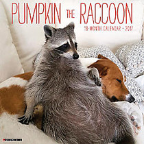Willow Creek Press 18-Month Monthly Wall Calendar, 12 inch; x 12 inch;, Pumpkin The Raccoon, July 2016 to December 2017