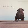 Seated Elephant Animal Canvas Print