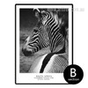 South Africa Pilanesberg National Park Zebra Animal Canvas Print (2)