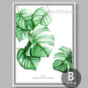 Monstera Deliciosa Design Watercolor Art