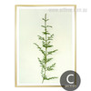 Minimalist Green Ferns Plant Life Canvas Artwork