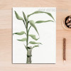 Bamboo Plant Painting Print