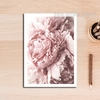 Modern Pink  Peony Flower Canvas Print