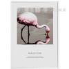 Reflection Flamingo Bird Art