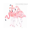Pink Flamingo Birds Group Print