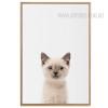 Cute Cat Animal Canvas Print