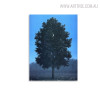 Moon Tree Botanical Abstract Vintage Painting Print