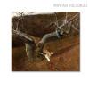 Jacklight Famous Artists Animal Still Life Landscape Scandinavian Picture Print