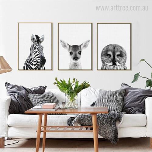 Kawaii Zebra, Fawn, Owl Animal Cute Photo Canvas Prints