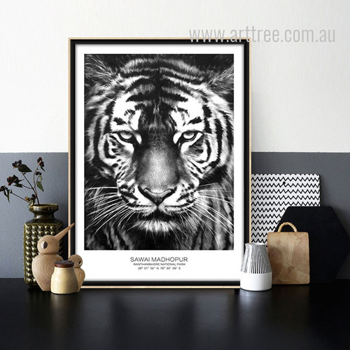 Sawai Madhopur National Park Tiger Animal Canvas Print