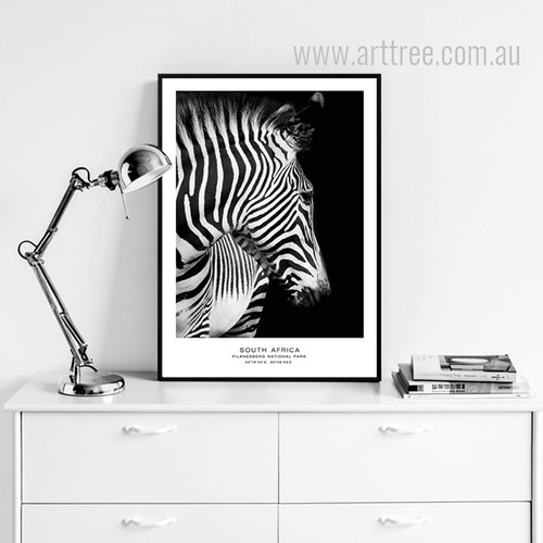 South Africa Pilanesberg National Park Zebra Animal Canvas Print