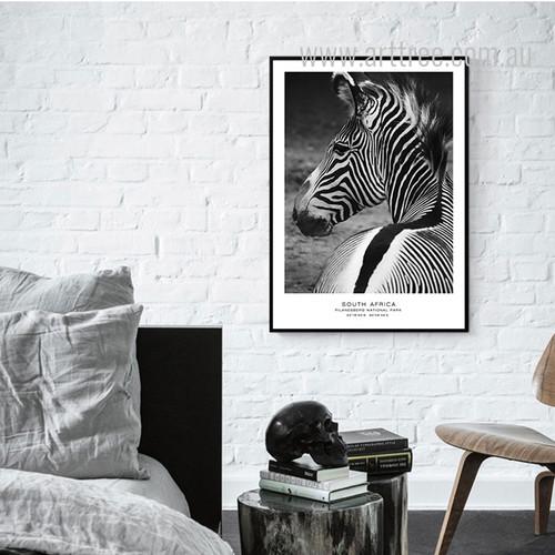 South Africa Pilanesberg National Park Zebra Animal Canvas Art