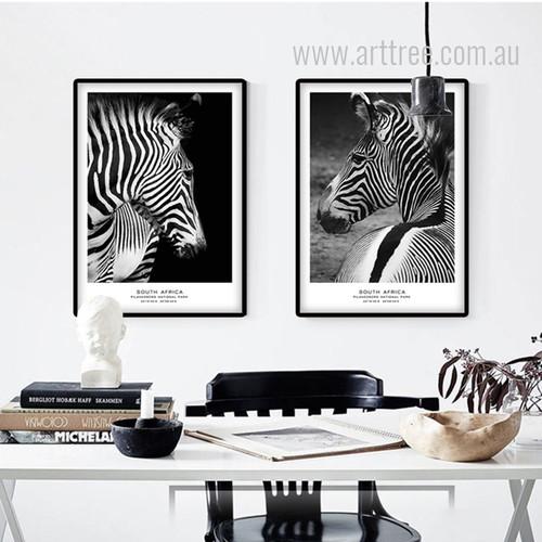 South Africa Pilanesberg National Park Zebra Animal Set