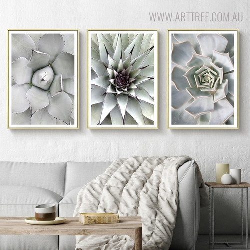 Cactus Botanical Modern Scandinavian Painting Print for Living Room Wall Equipment