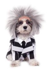 Beetlejuice Pet Costume