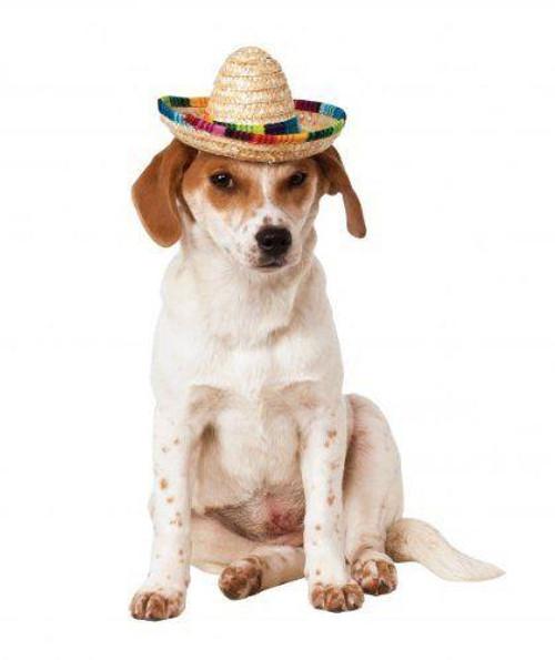 Doggie Sombrero w/ Elastic Headband