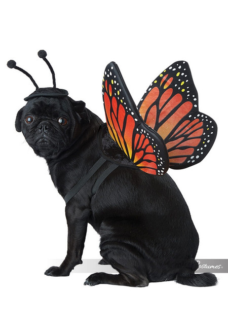 Monarch Butterfuly Dog Costume