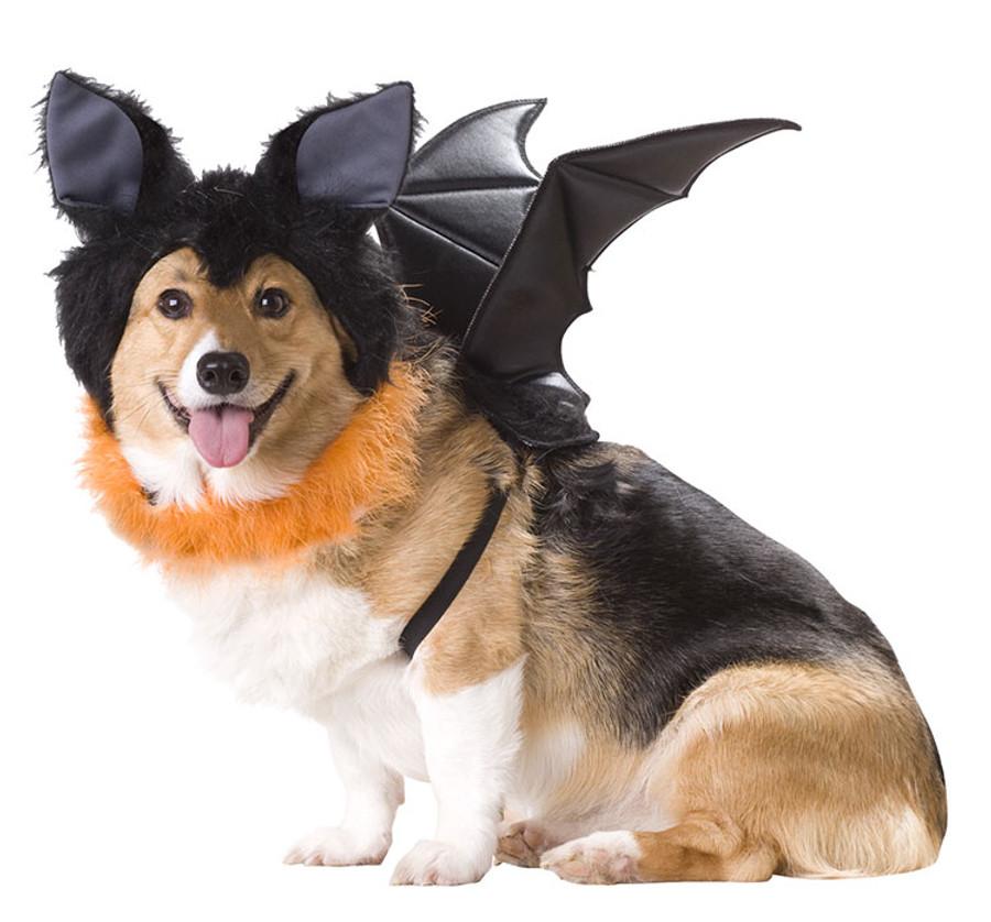 Bat Dog Costume Licensed Animal Planet