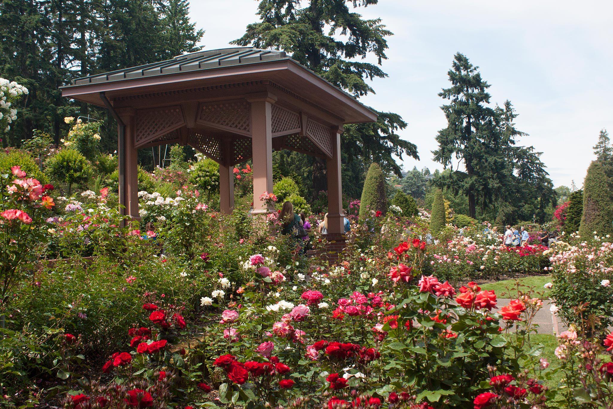 International Rose Test Garden Your Story Portland