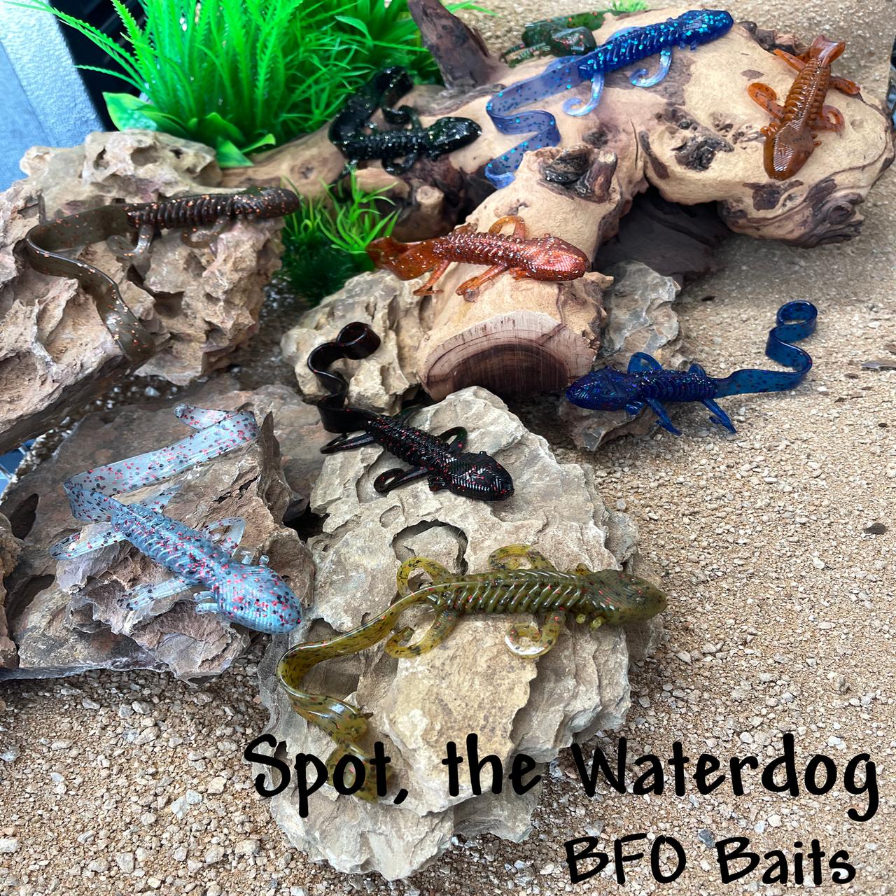 Spot, the Waterdog