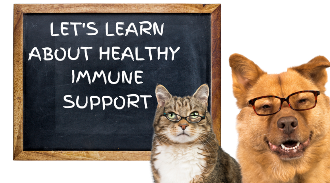 How To Build A Strong Immune System - Naturally
