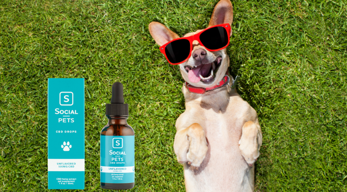 Natural Pain Relief For Dogs - CBD