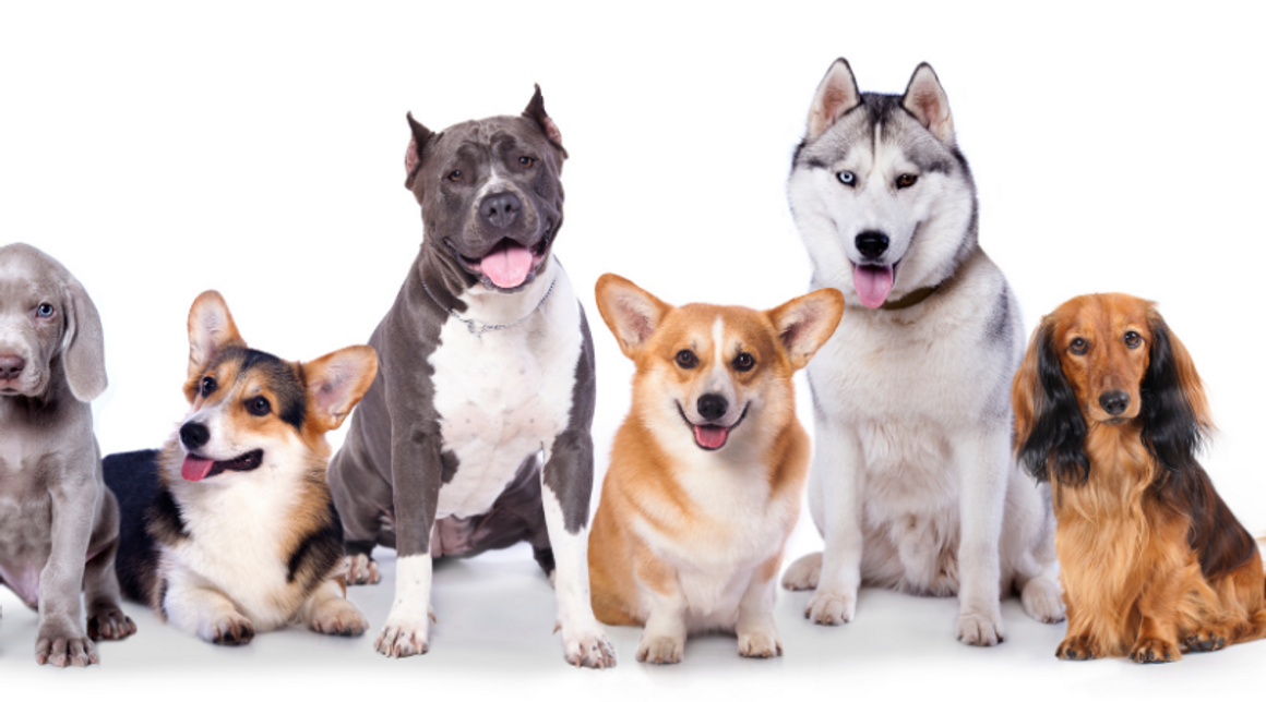 ​Spaying and Neutering For Dogs: The Holistic Perspective