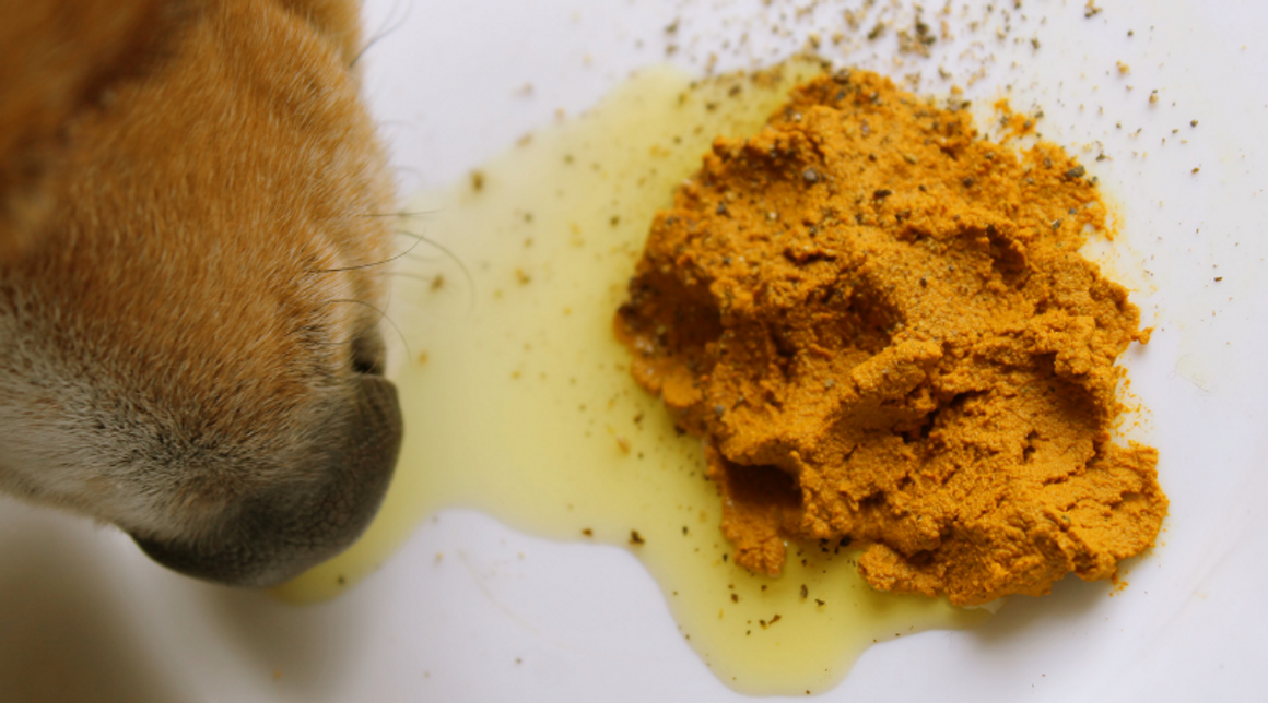 Best Dog Supplements - How to Choose?