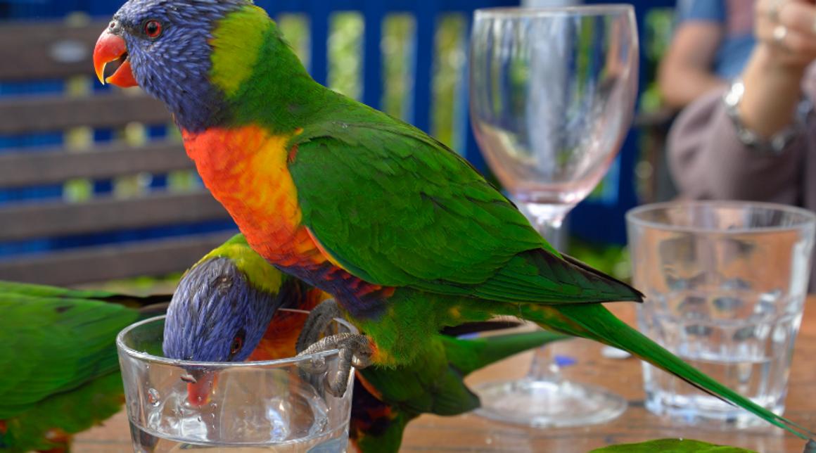 Colloidal Silver For Birds