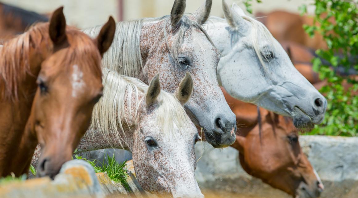 Colloidal Silver For Horses