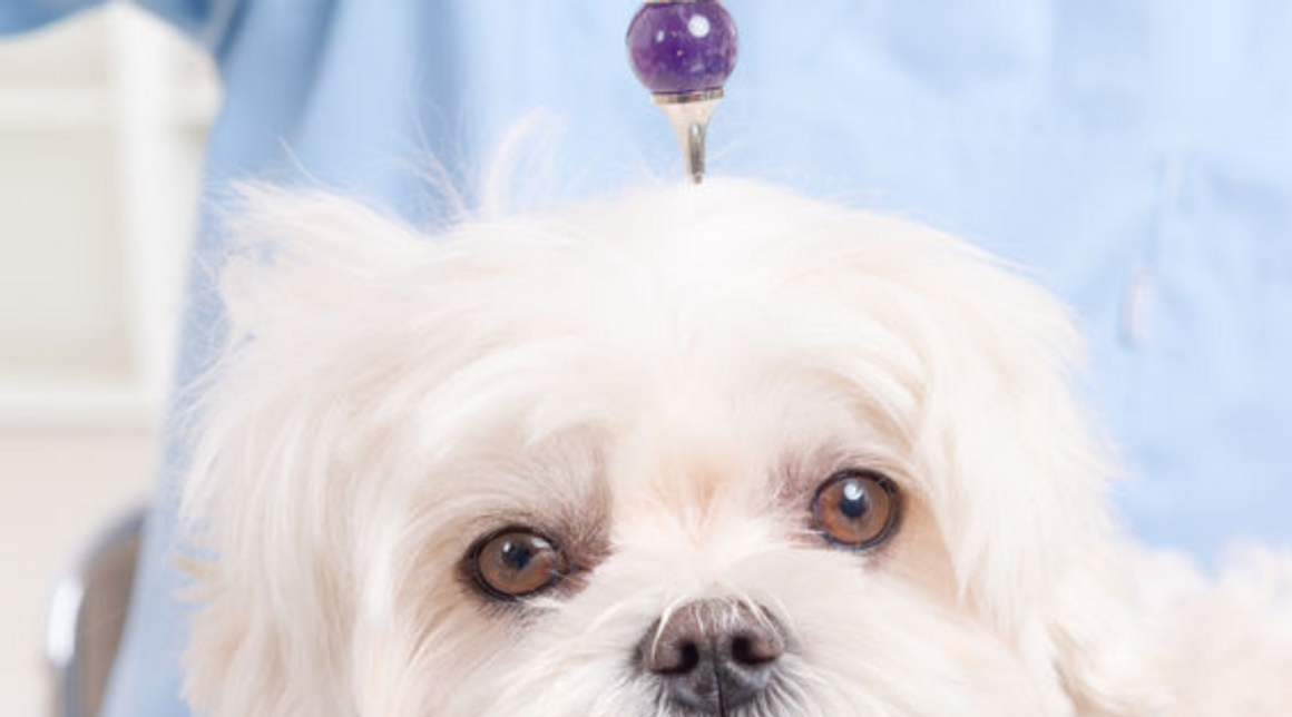 Crystal Healing for Pets