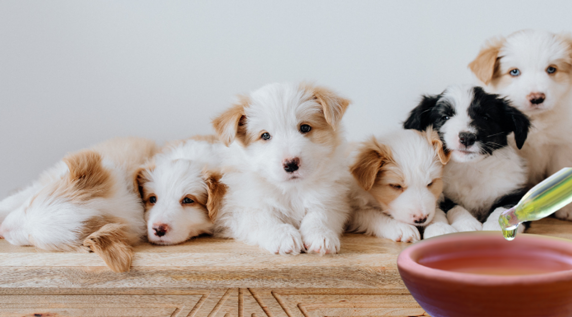 What are Homeopathic Nosodes For Pets?